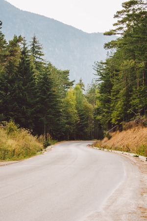 founders: asphalt road in the mountains among the pine forests
