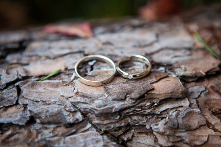 annual ring annual ring: Couple wedding rings on old wood texture, the bark of the tree Stock Photo