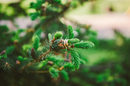 Two gold wedding rings on a branch of a coniferous tree. Stock Photo