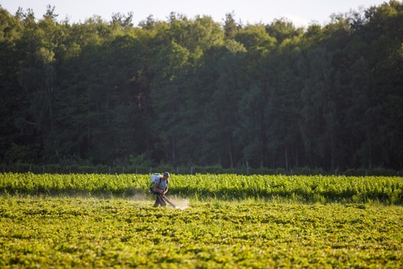 Worker employed farmers are going to spray herbicides on paddy fields in a rural area early morning. Stock Photo