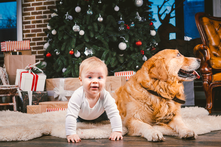 Friendship man child and dog pet. Theme Christmas New Year Winter Holidays. Baby boy on the floor decorated tree and best friend dog breed Labrador Golden Retriever.