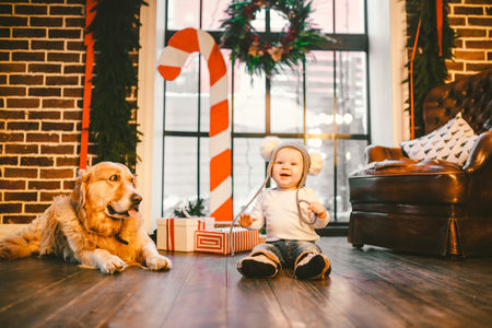 Friendship man child and dog pet. Theme Christmas New Year Winter Holidays. Baby boy crawling learns walk wooden floor decorated interior of house and best friend dog breed Labrador golden retriever.
