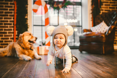 Friendship man child and dog pet. Theme Christmas New Year Winter Holidays. Baby boy crawling learns walk wooden floor decorated interior of house and best friend dog breed Labrador golden retriever. Standard-Bild - 115334451
