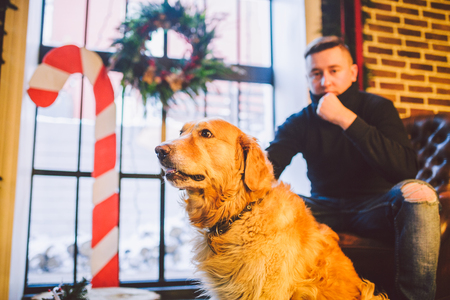 The theme is the friendship of man and animal. Caucasian young male and pet dog breed Labrador Golden Retriever at home inside in winter. Christmas time, New Year holidays. Standard-Bild - 115334539
