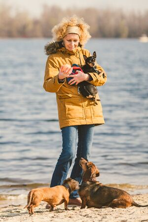 Subject lot pets, dog lover on walk. Adult, old elderly Caucasian woman with three dogs breed dachshund and hands toy terrier. owner plays with ball dog on beach near reservoir river lake in sunny.