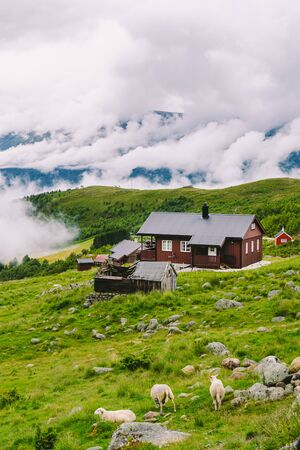 Norwegian landscape with typical scandinavian grass roof houses and the sheep grazing in the valley. Idyllic landscape of sheep farm in Norway. view rural landscape with farmhouses plateau and sheep on mountain pasture Banco de Imagens