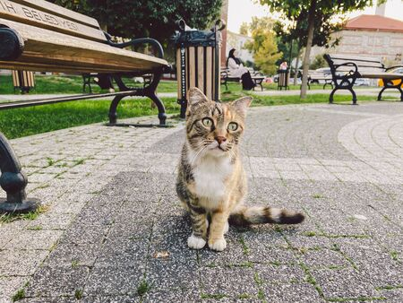 Cat in Istanbul, Turkey. Homeless Cute Cat. A street cat in Istanbul. Homeless animals theme.