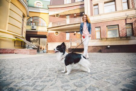 Theme walk with pet. Caucasian young woman and chihuahua dog on a leash in two of a european old house. dog chihuahua with her owner. theme is the friendship of man and animal.