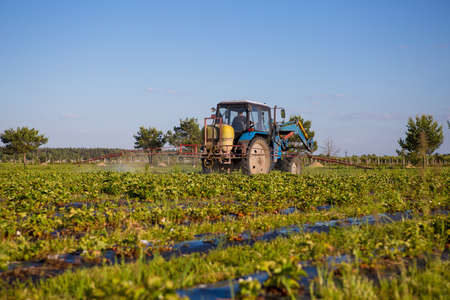 Agricultural tractor cultivates the soil on the field. Ukraine, Kiev June 2, 2017. Stock Photo