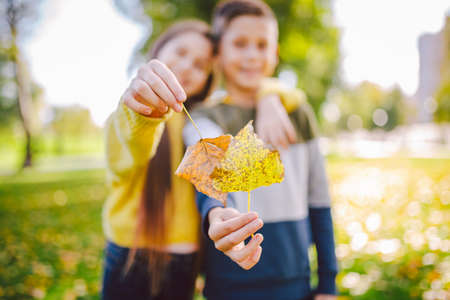 Happy twins teenagers boy and girl posing hugging each other in autumn park holding fallen yellow leaves in hand in sunny weather. Autumn season theme. Brother and sister have fun playing with leaves. 免版税图像