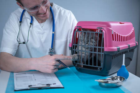 Male veterinarian takes notes on health check of gray Scottish Straight kitten in animal carrier on examination table in clinic. Veterinarian wiriting on clipboard near tabby cat. Check health animal Reklamní fotografie