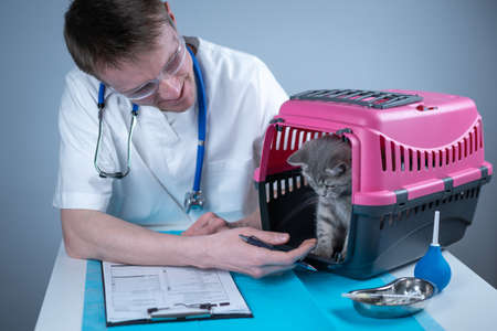 Cat in pet carrier on examination table of veterinarian clinic with pet doctor. Male veterinarian in white medical suit making notes at examination table and have fun with Scottish Straight kitten Reklamní fotografie