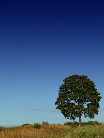 Lonely tree on sky background Stock Photo - 1268121