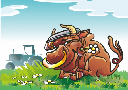 bull with a ring in the cap in the grass on a field tractor chamomile flowers in the sky clouds