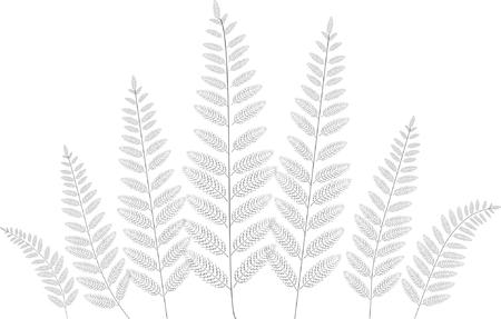 Vector fern leaves silhouette Ilustrace