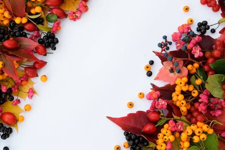 Wild berries and leaves autumn background, blank space, on white