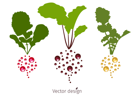 Vegetable logo, beets, red and white radishes with green leaves, vector design.
