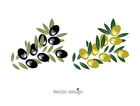 Olive branch, Plant logo, black and yellow olive with green leaves, vector design.