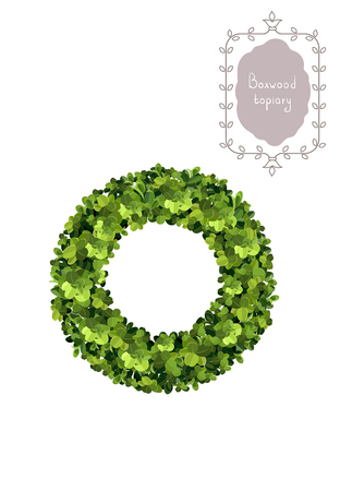 Green boxwood wreath, Christmas wreath. Boxwood topiary, garden plant, vector background. English boxwood. Ilustração