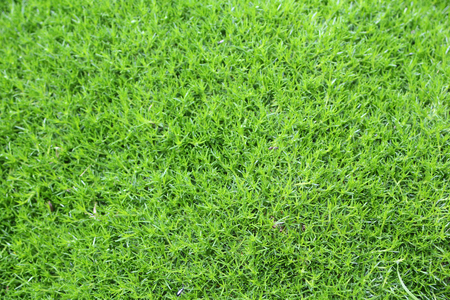 abstract natural green grass texture Banco de Imagens