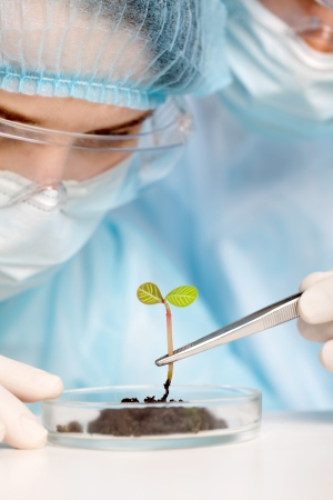 biotech: Plant in a test tube in hands of  Stock Photo