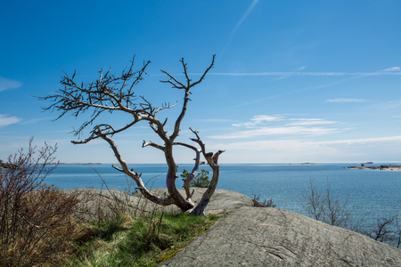 Finland Hanko Early Summer. Scenic view of Baltic sea, and blue sky, Lonely tree on the rock. Peaceful Finnish landscape.
