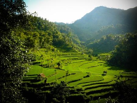Vista de la terraza de arroz brillante en Bali de Tirtagangga