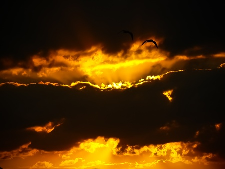 Dark clouds with sunshine and birds flying