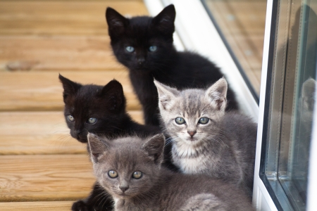 Un groupe de quatre chats bébé ensemble sur une terrasse en bois