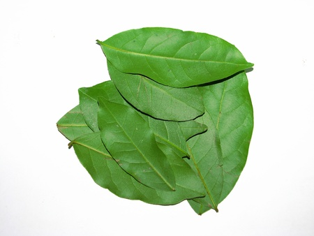 The bay leaves over white photo
