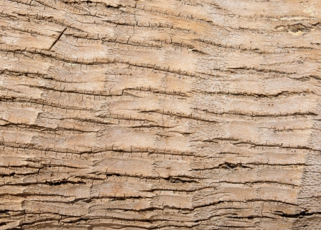 Detail of a trunk of coconut palm tree background photo