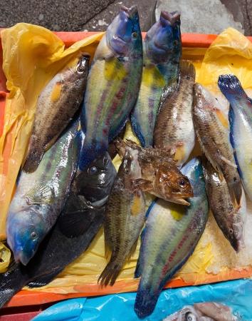 seafish: Fresh seafish on the fish market in Nice, France