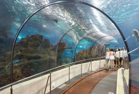 live coral: BARCELONA, SPAIN - JULY 4, 2015: Unidentified tourists looking at fishes at the aquarium of Barcelona. Editorial