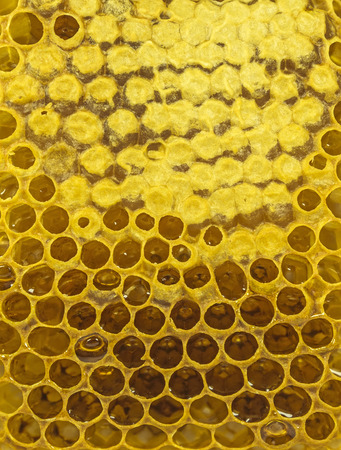 cluster house: Fresh yellow honeycomb with honey background.