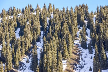 tien shan: Winter in Tien Shan mountains, canyon Butakovka, Almaty, Kazakhstan