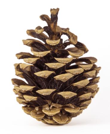 pomme de pin: pin Brown c�ne sur le fond blanc
