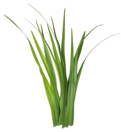 stalk: Blade of grass isolated on white background. Clipping Path included for your design.