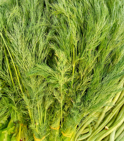 potherb: Bunch of ripe green dill background at the market Stock Photo