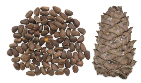 cone shell: Unpeeled cedar nuts with cone isolated on white background.
