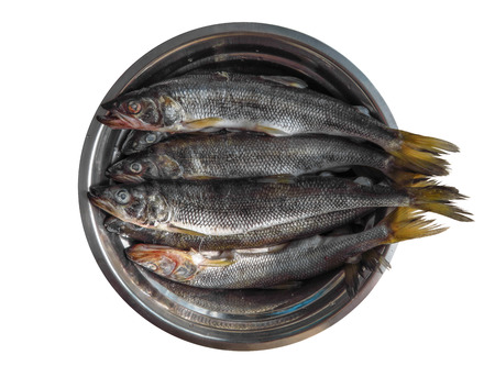 Fresh raw fish in the metal dish isolated on white. Clipping Path included.