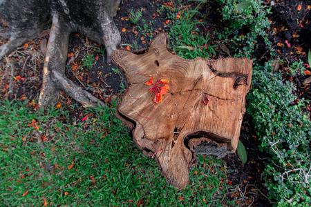 stumped: Tree Stump Stock Photo