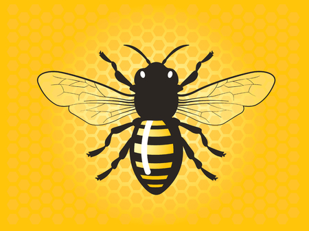 Detailed honey bee vector illustration.