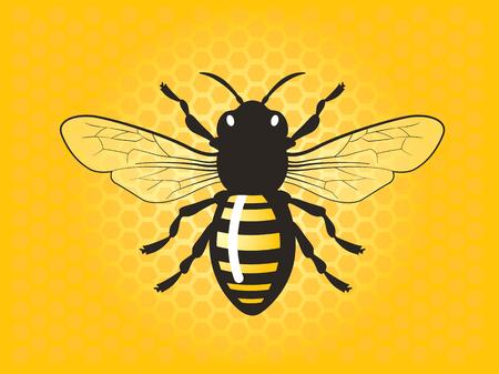 Detailed honey bee vector illustration. Illustration