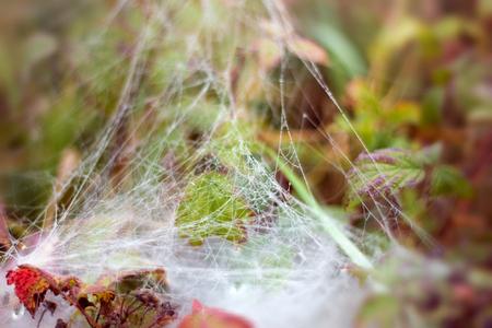 net: Spider web Stock Photo