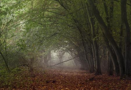 Foggy autumn landscape. 版權商用圖片