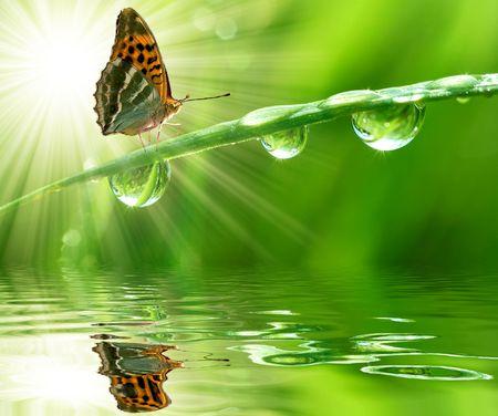 Rocío de la mañana fresca y mariposa  Foto de archivo