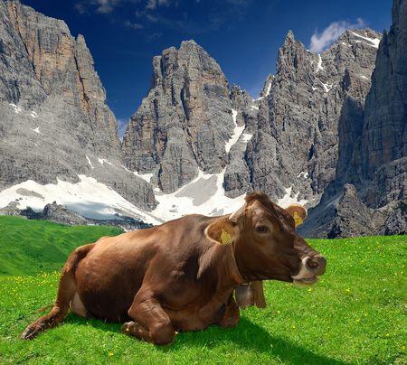 Lying cow pasture behind the mountain Brenta- Dolomites Italy  Stock Photo