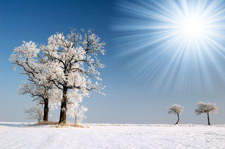 wintrily: Albero congelato