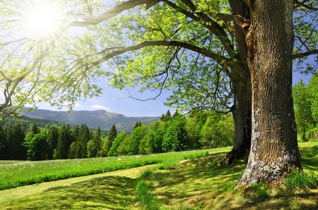 Lente landschap in het nationaal park Sumava - Tsjechië