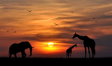 serengeti: silhouette elephant and giraffes in the sunset
